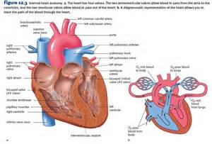 Congestive Heart Failure Diagram