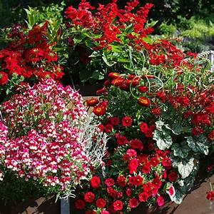Blumen Für Den Balkon : blumen f r den balkon ~ Michelbontemps.com Haus und Dekorationen