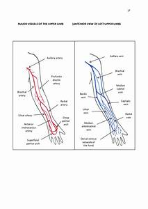 Le 5616  Diagram Of Veins In Your Arm Wiring Diagram