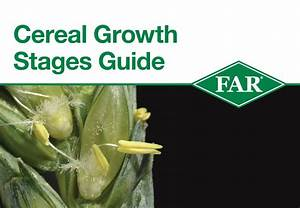 Far Research - Cereal Growth Stages Guide