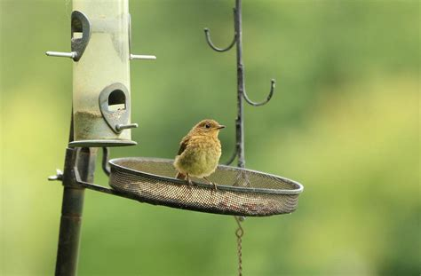 attracting birds to your feeder audubon new york