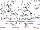 Emu Coloring Printable sketch template