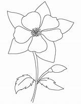 Columbine Coloring Flower Blooming Drawing Pages Colorado Template Printable Mountain Rocky Flowers Sketch Bell Aquilegia State Purple Garden Colouring Getdrawings sketch template
