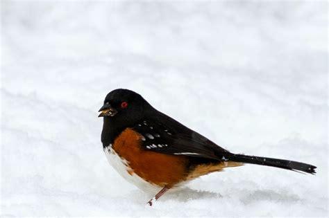 pacific northwest birds