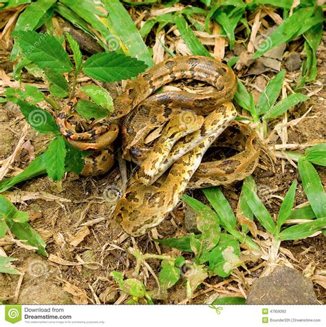 a tropical snake in a garden stock photo image 47959262