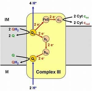 Q10 complex