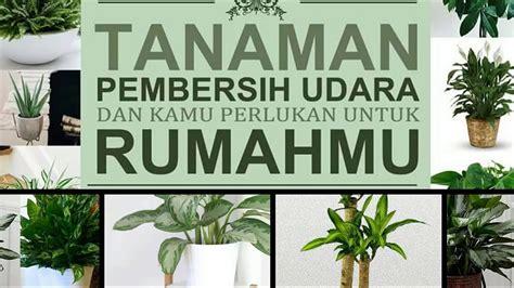 tanaman pembersih udara kamu perlukan rumahmu