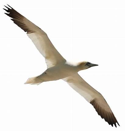 Burung Terbang Bird Flight Gambar Birds Paling