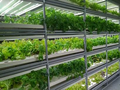 Hydroponic Farming Solutions Services