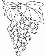 Grapes Coloring Colouring Pages Drawing Line Raisins Picolour Printable Getdrawings Paintingvalley Getcolorings sketch template