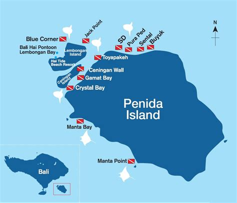 diving nusa penida bali underwater photography guide