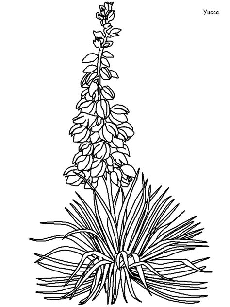 Printable Yucca Flowers Coloring Pages - Coloringpagebook.com