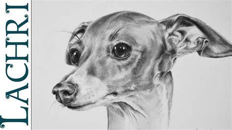 "foto de Time Lapse ""Italian Greyhound"" Graphite Pencil speed"