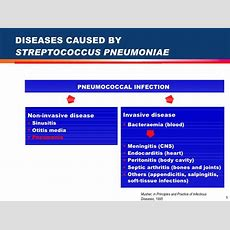 Emerging Concepts In Pneumococcal Disease Prevention In