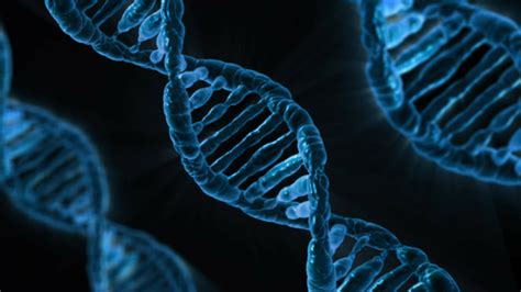 the keys to a major process in dna repair