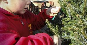 Boy Scouts spread Christmas cheer