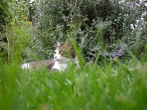 Rasen Vertikutieren Zeitpunkt : vertikutieren optimaler zeitpunkt anleitung und ger te handtuchgarten ~ Orissabook.com Haus und Dekorationen