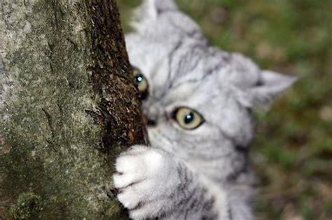 Kaķi. - Spoki
