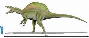 Image Spinosaurus Scale 2jpg Prehistoric Wiki