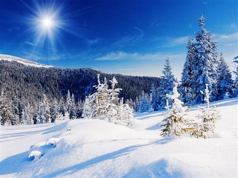 Bare Trees Winter Snow Wallpaper, Scorched Earth