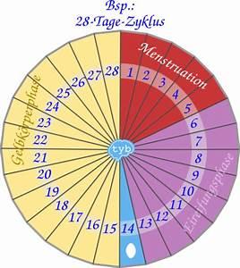 Zyklus Eisprung Berechnen : menstruationskalender f r profis ~ Themetempest.com Abrechnung