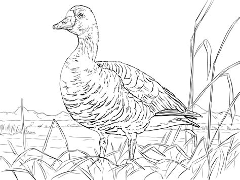 Kleurplaat Gans by Goose Coloring Pages To And Print For Free