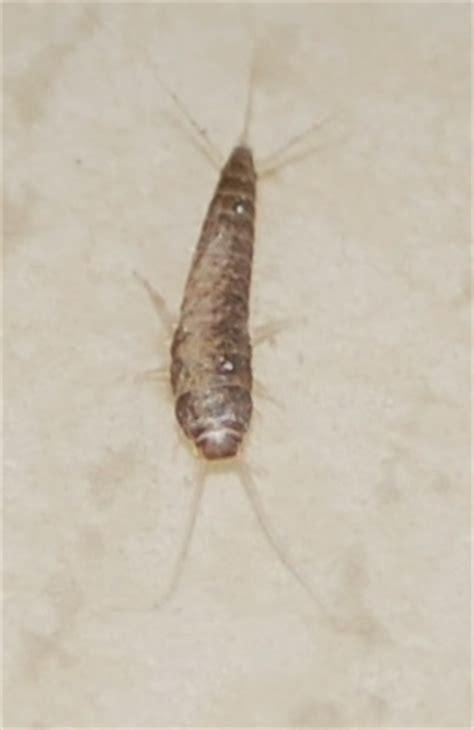 recherche le nom d un insecte pr 233 sent dans ma salle de bain r 233 solu