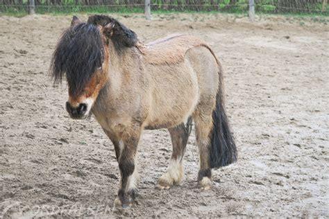 eindecken scheren und der waermehaushalt der pferde