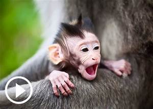 Videos of Baby Animals Yawning, Cute Pets | Teen.com