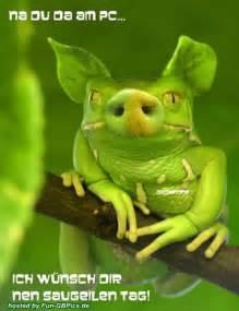 frosch sprüche schönen tag sprüche bilder gruß lustig bilder gb bilder whatsapp bilder gb pics jappy