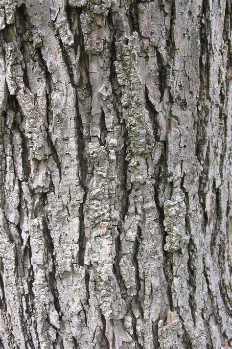 tronco rugoso ramas velocidade diagonal follas raice