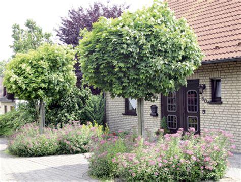 Kleine Sträucher Für Den Garten by Baum F 252 R Vorgarten Die Besten 25 Baum Vorgarten Ideen Auf