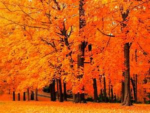 Fall, Tree, Tree, Flower, Backgrounds, Amazing, Trees, Forest, Autumn, Season, Color, Nature
