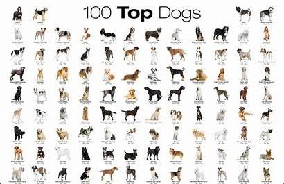 Breeds Dog Alphabetical Most Order Popular Favorite