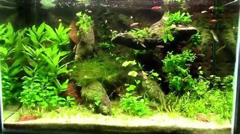 decoration pour aquarium d eau douce d 233 coration aquarium
