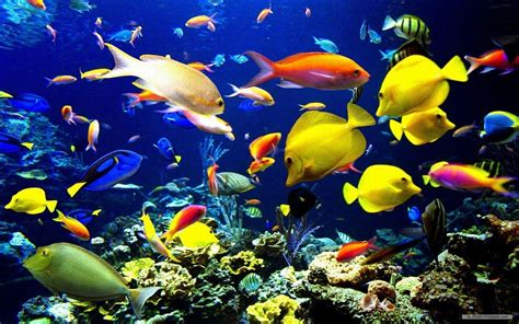 Marine Animal Wallpaper - marine wallpapers wallpaper cave