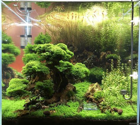 garnelen oase flowgrow aquascapeaquarien datenbank