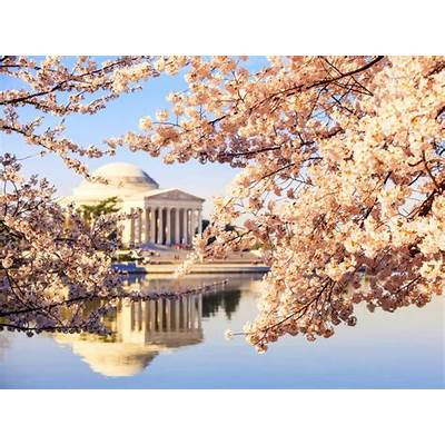 National Cherry Blossom Festival : Arts and Culture