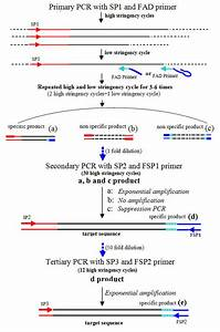 Fusion Primer And Nested Integrated Pcr  Fpni