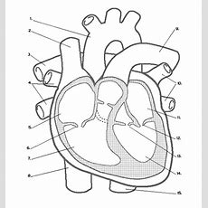Heart Labeling (internal