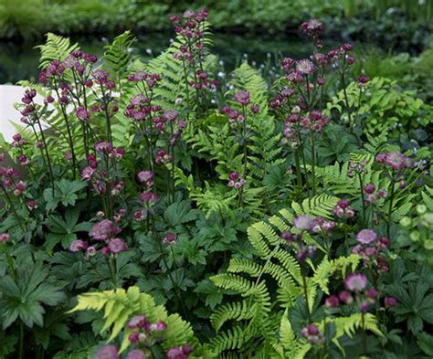 My Favorite Plant Combinations 70 (my Favorite Plant