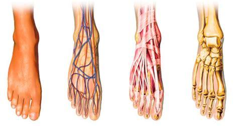 cuisine saine le sang circule mal dans vos pieds et dans vos mains nous avons une solution à cela