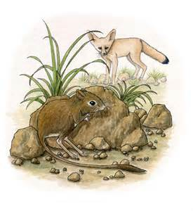 Desert Kangaroo Rat Adaptations