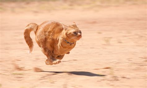 cat fast run running