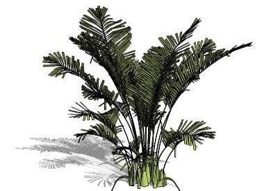 sketchup components 3d warehouse plants plant tree