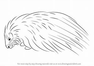 Learn How to Draw a Crested Porcupine (Other Animals) Step ...
