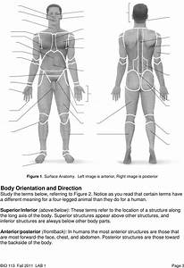 Bio 113 Lab 1  Anatomical Terminology  Positions  Planes