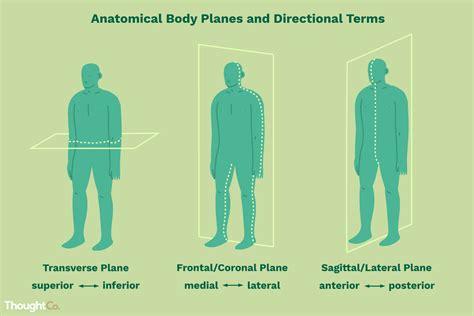 terminos direccionales anatomicos  planos corporales