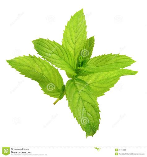 Peppermint Royalty Free Stock Image Image 20714306