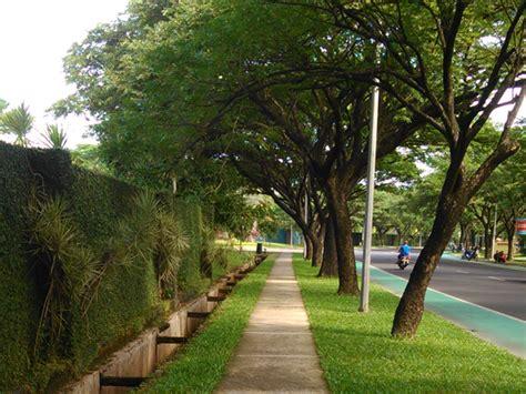 awas bahaya pohon trembesi sebagai tanaman peneduh